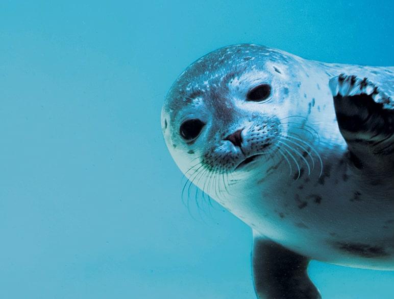 Bébé phoque aquarium de Biarritz